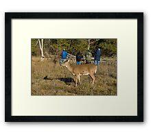 Doe, where is the deer! Framed Print
