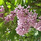 Korean Lilac Tree (detail) by karenfou