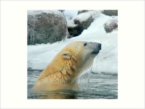 Winter swimming by Alan Mattison