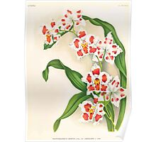 Iconagraphy of Orchids Iconographie des Orchidées Jean Jules Linden V17 1906 0126 Poster