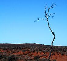 Lone tree in the desert by Joanne Emery