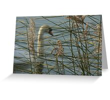 Swan behind reeds screen Greeting Card