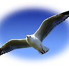 Flight of a Gull! by Gabrielle  Lees
