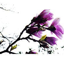 Purple Bower Photographic Print