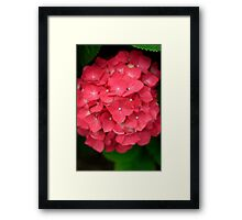 Hydrangea #2 Framed Print