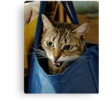 Bag it, Dano Canvas Print