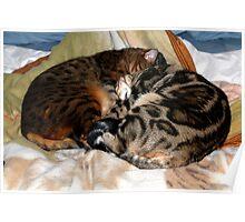Bengal Yin and Yang Sleeping Postion? Poster