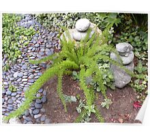 Ferns With Stone Friends Poster