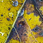 leaf detail by vigor