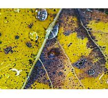 leaf detail Photographic Print
