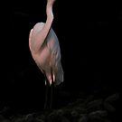 Egret by RoseMarie747