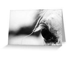 White horse's eye Greeting Card