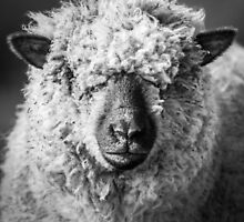 Wool Face by George Wheelhouse