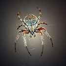 Garden Orb Weaver by RebeccaBlackman