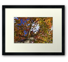 Fall In Tallahassee Florida Framed Print