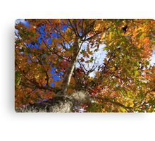 Fall In Tallahassee Florida Canvas Print
