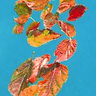 Autumn Leaves floating with friends by DAdeSimone