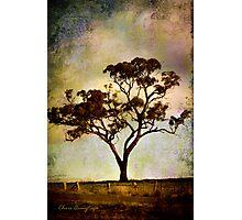 Earth's poetry Photographic Print