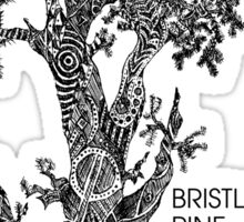 Bristlecone Pine Sketch Sticker