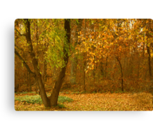 Fall in my Yard Canvas Print