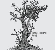 Bristlecone Pine Sketch by Hinterlund