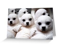 Adorable Seal Pups Greeting Card