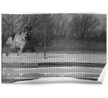 What Fence Poster