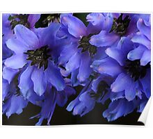 Pacific Giant Black Knight Delphinium! Poster