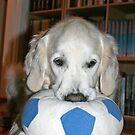 Come play with me! Pleeeeeeease!! by Trine
