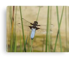CHASER DRAGONFLY Metal Print