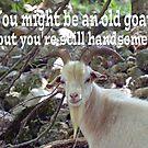 Old Goat Card by Susan S. Kline