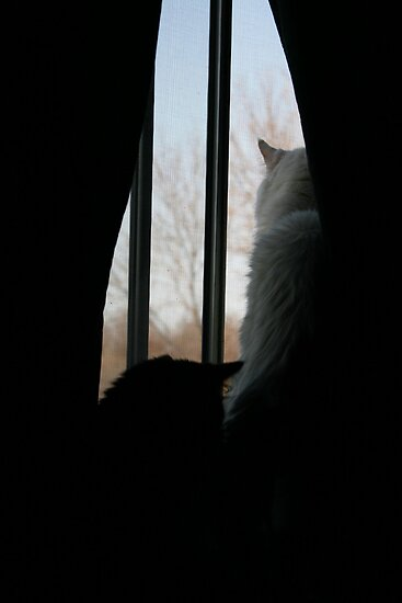 Looking Out the Window by Alyce Taylor