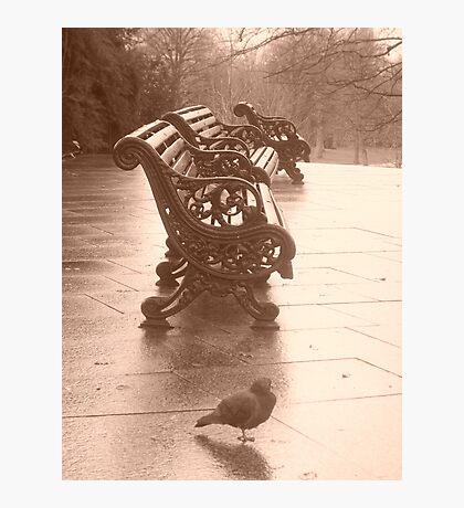 Greenwich Park Photographic Print