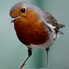 The ROBIN !!! by AnnDixon