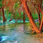 Havasu Creek  by Brent Sisson