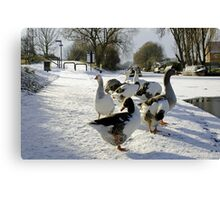 Geese at the Frozen Horninglow Basin Canvas Print