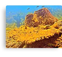 Coral Blossom! Canvas Print