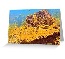 Coral Blossom! Greeting Card