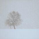 Let it snow... by Bluesrose