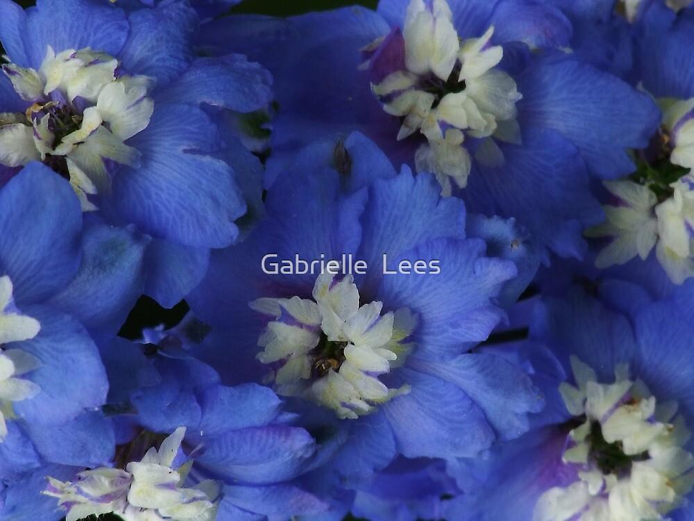 Cobalt Blue Delphinium! by Gabrielle  Lees