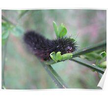 Take your walk on a shady leaf or stalk Poster