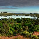 Wetlands by Cecily McCarthy