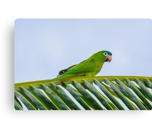 Parrot on a palm Canvas Print