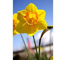 happy daffy Photographic Print