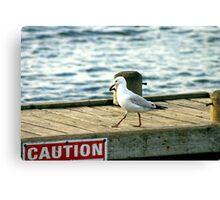 Caution Gully! Canvas Print