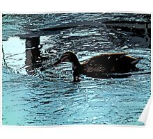 Like a Duck to water Poster