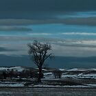 Lone Tree under Big Sky  by Ken McElroy
