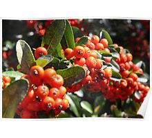 Autumn Berry Poster