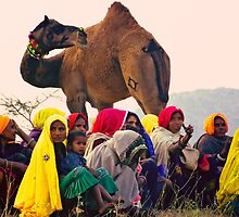 The United Colors of Rajasthan by Neville Bulsara