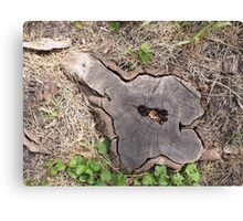 Overhead view of an old stump of cut tree Canvas Print